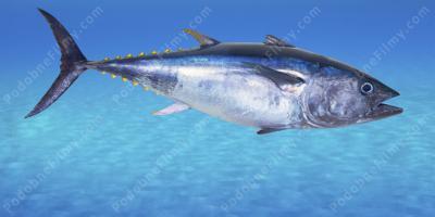 Ryby w morzu randki cleveland